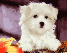 Load image into Gallery viewer, Cute White Puppy Painting - All Paint by numbers