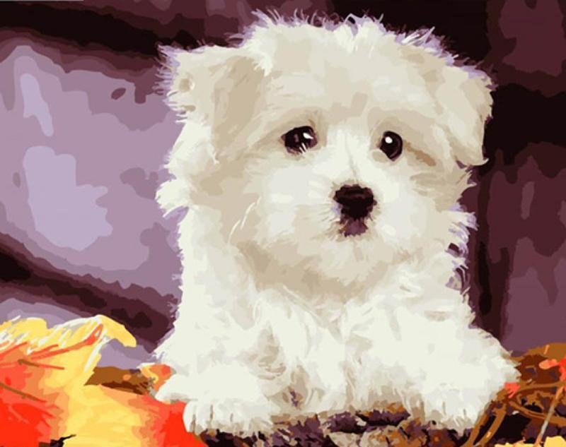 Cute White Puppy Painting - All Paint by numbers