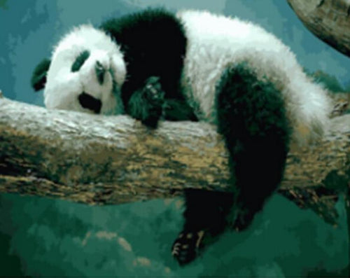 A Panda Resting on the Tree - All Paint by numbers