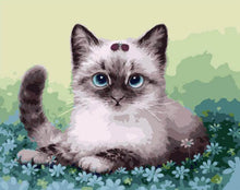 Load image into Gallery viewer, Very Cute Little Kitten - Paint it Yourself - All Paint by numbers