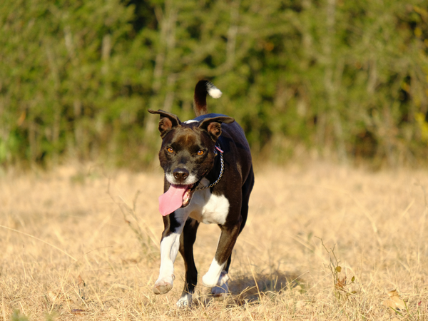 Moving Tips for a Dog-Friendly Stress Free Move