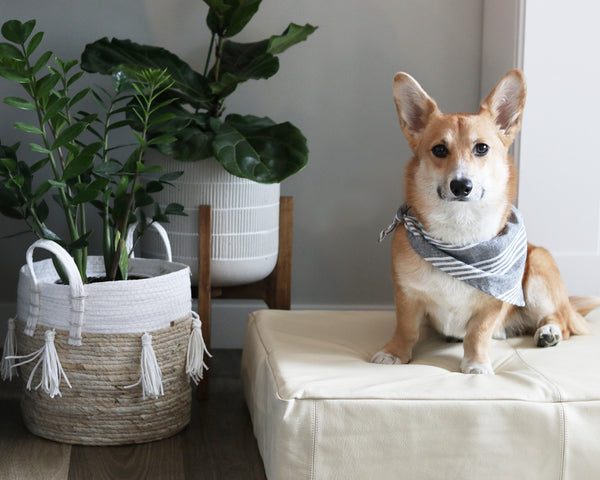Le Dog Company Leather Dog Bed in Bone