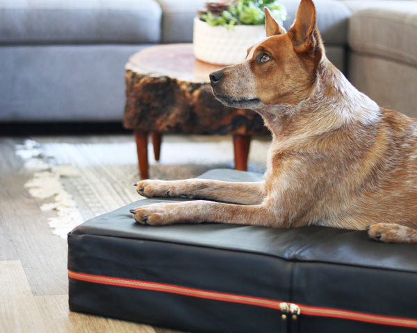 Le Dog Company Leather Dog Bed in Black