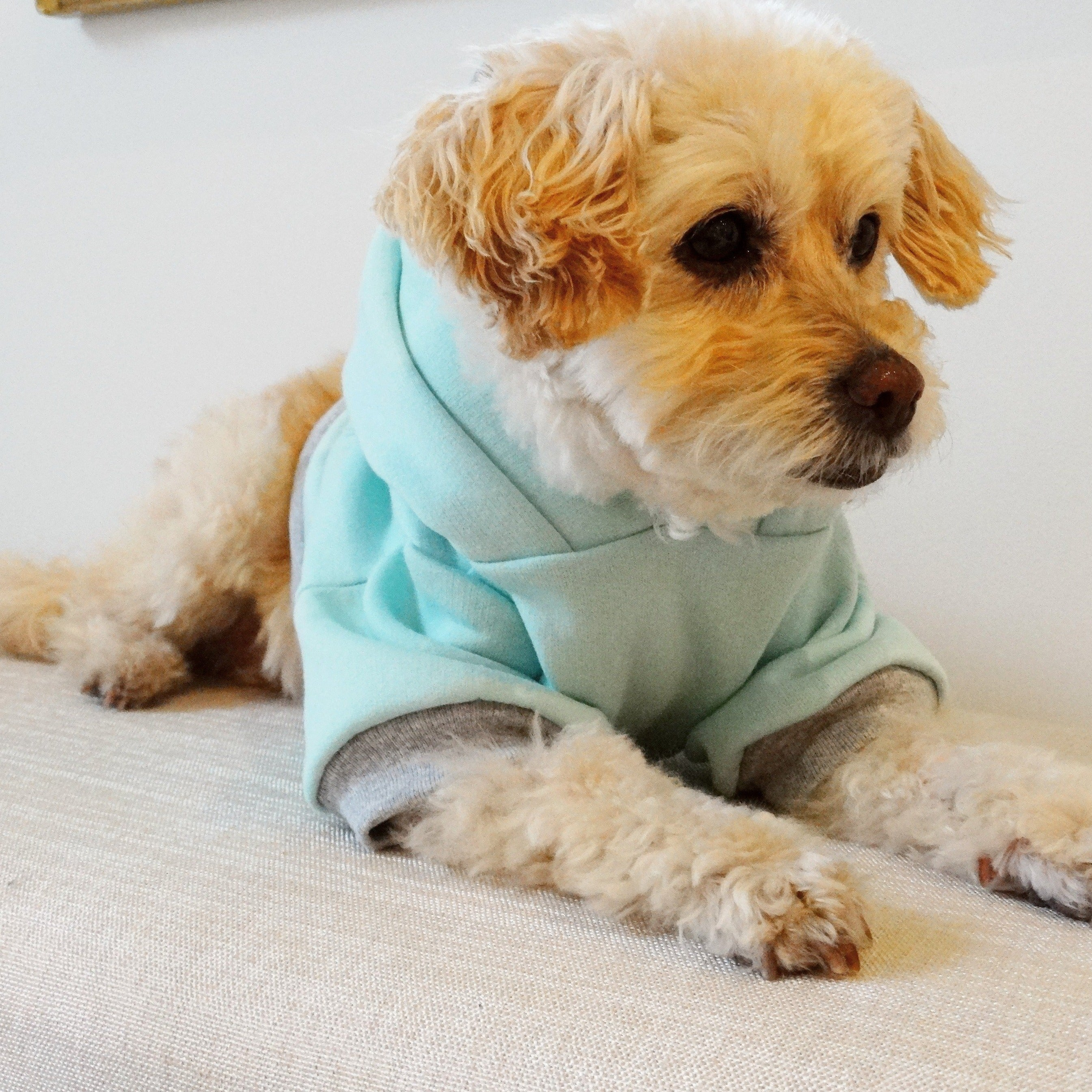 Chill Teal Dog Hoodie