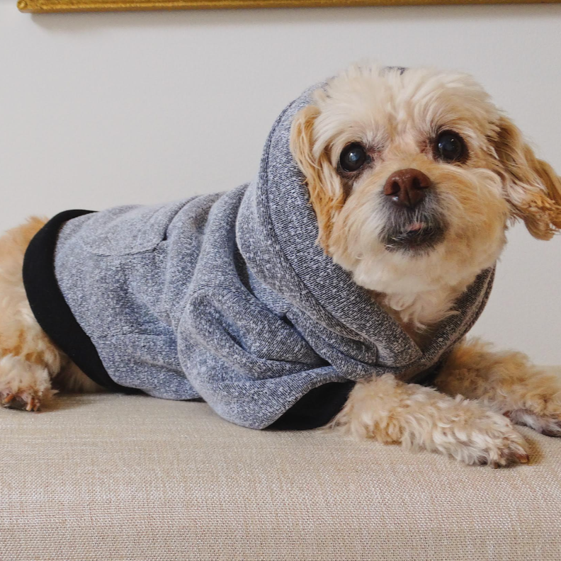 Dog Wearing Heather Grey Dog Hoodie