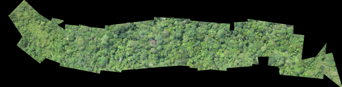 An orthomosaic map of a jungle area.
