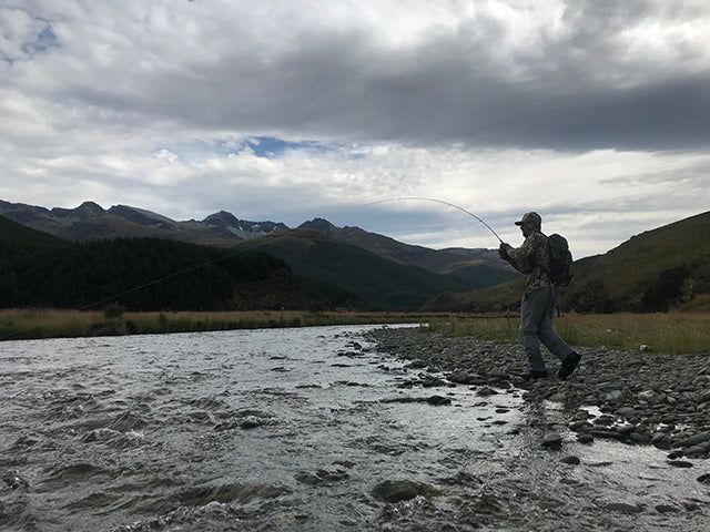 Brown trout, back country new zealand, fly fishing