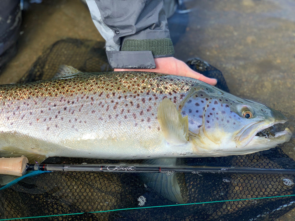 Massive New Zealand brown trout and Scott Centric