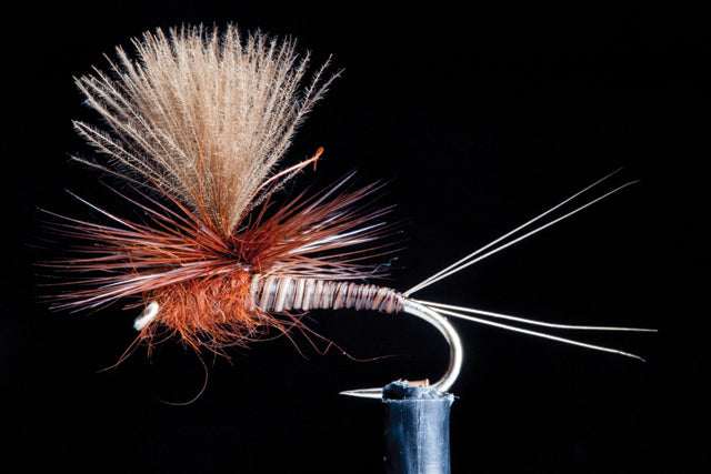 Quill Spinner Brown