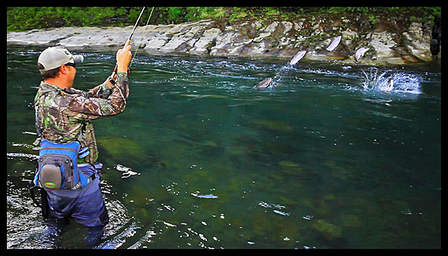 photo of a jumping rainbow trout