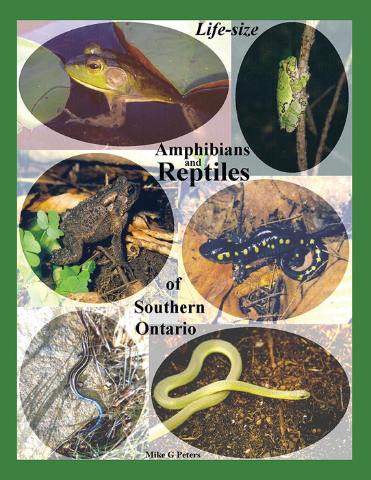 Life Size Amphibians and Reptiles of Southern Ontario