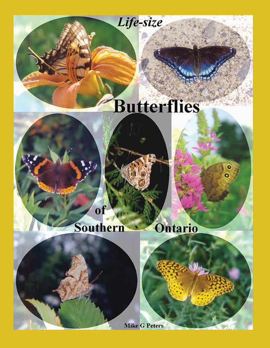 Life Size Butterflies of Southern Ontario
