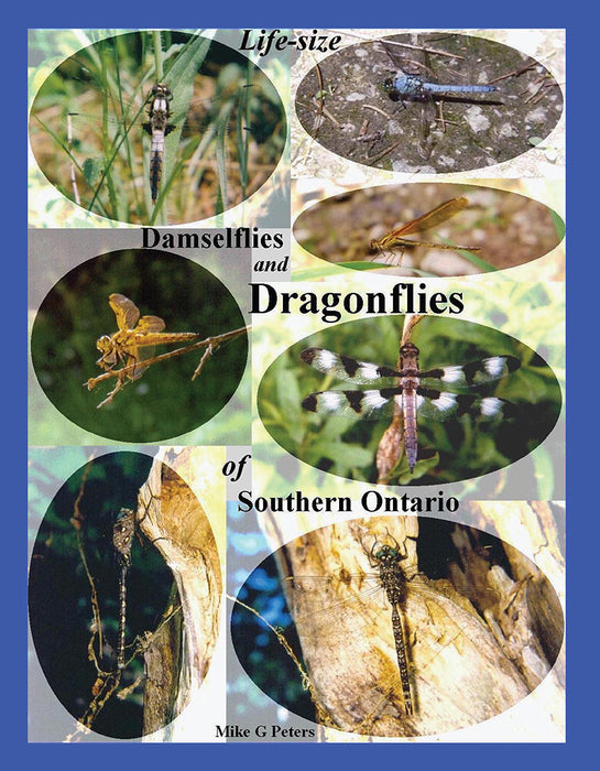 Life Size Damselflies & Dragonflies of Southern Ontario