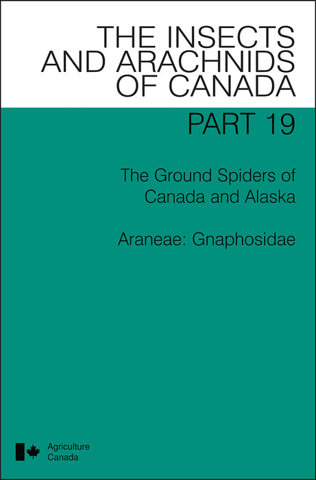 The Ground Spiders of Canada and Alaska