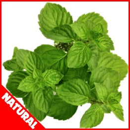 FW SPEARMINT FLAVOUR ( NATURAL ) CONCENTRATE