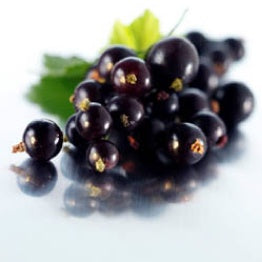 FW BLACKCURRANT FLAVOUR CONCENTRATE