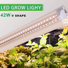 Load image into Gallery viewer, T8 LED Grow Light 4FT, 252W(6×42W) Plant Grow Light Strips with Reflectors, Full Spectrum Sunlight Replacement with High PAR for Indoor Plant, 6-Pack (6063672885404)