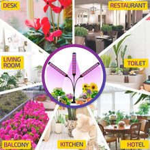 Load image into Gallery viewer, LED Plant Grow Light, 70W Red Blue Spectrum Grow Lights for Indoor Plants with Desk Clip, Auto ON/Off 3/6/12H Timer, 6 Dimmable Level, Adjustable Gooseneck (6099379749020)