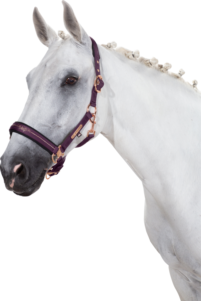 Eskadron AW20 Heritage Glossy Doublepin Headcollar V Deepberry | Country Ways