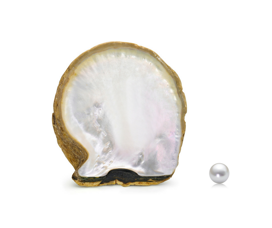 White South Sea Oyster