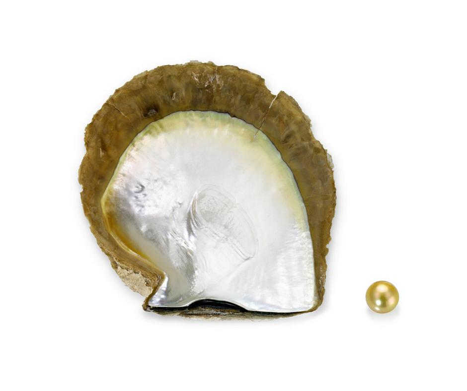 Gold-Lipped South Sea Oyster