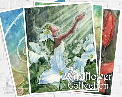 Wildflower Collection