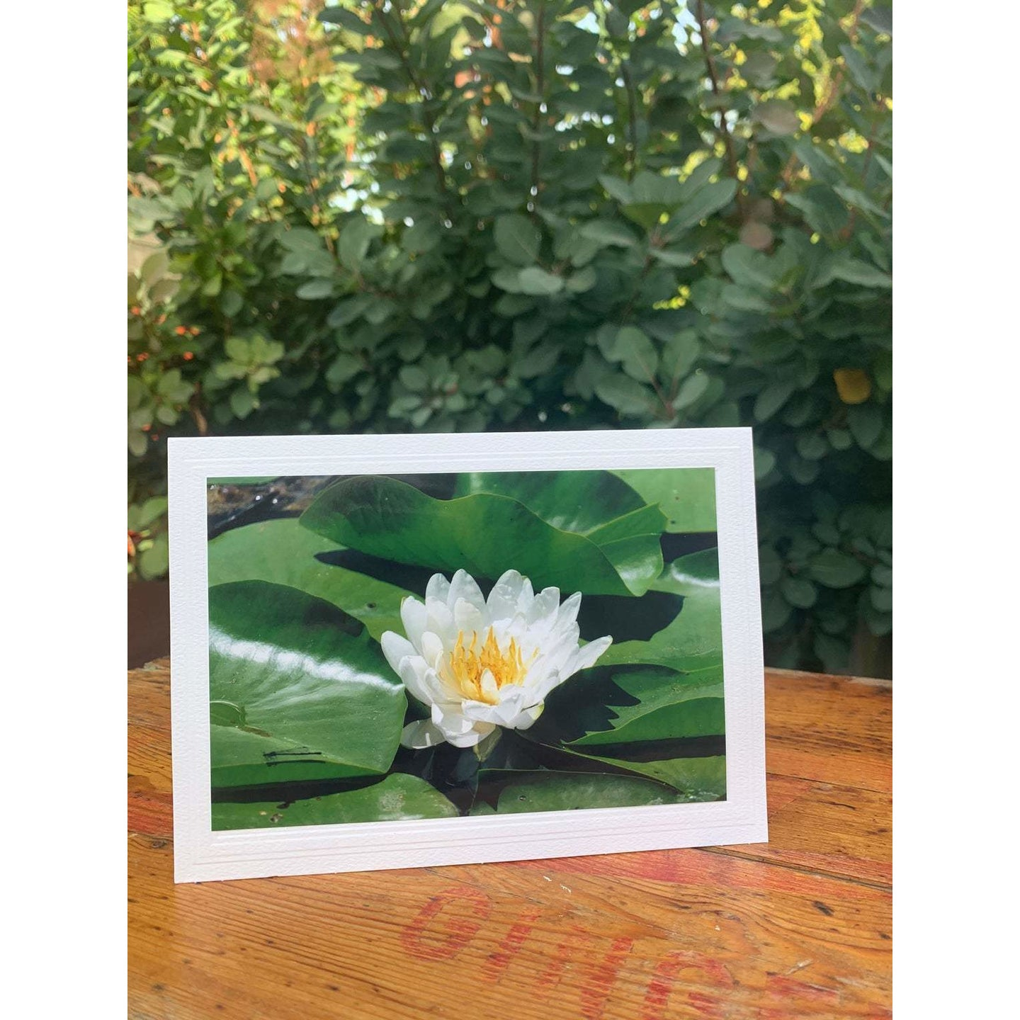 Water Lily White Peeking Through, Note Card, Blank Inside