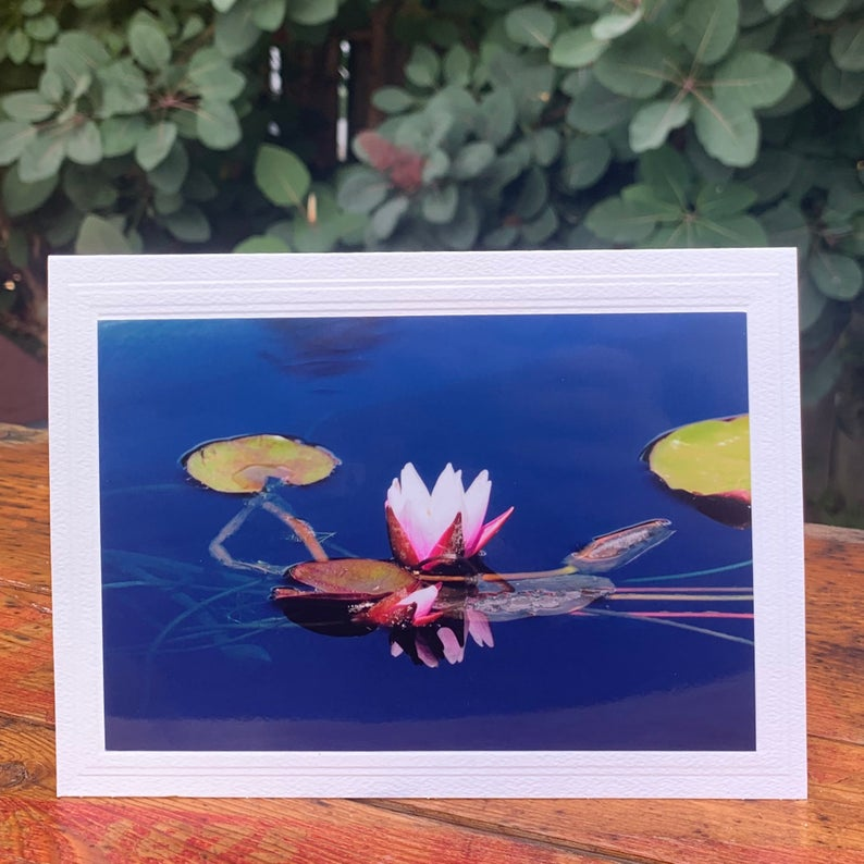 Water Lily Pink/White, Note Card, Blank Inside