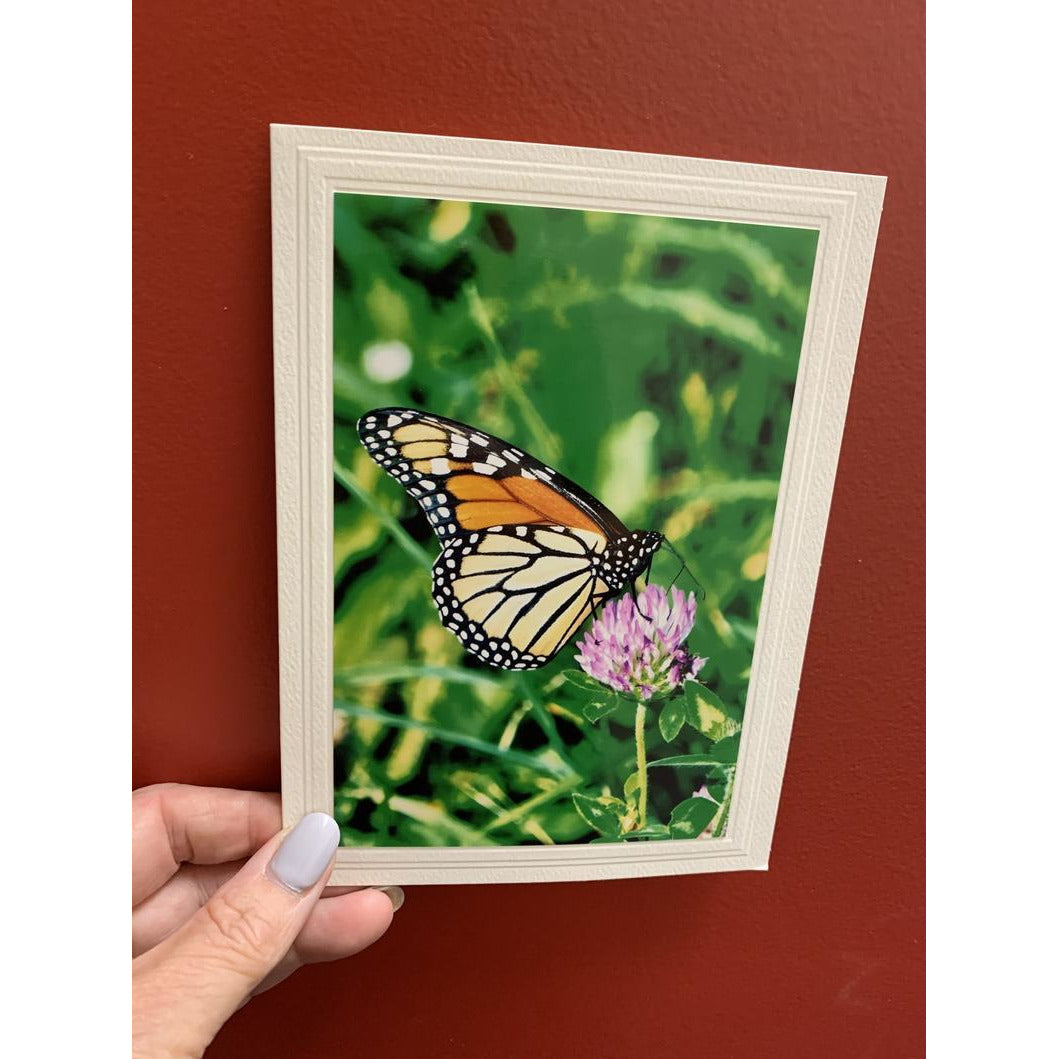 Monarch Butterfly on a Thistle Note Card, Blank Inside