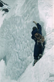 Team member climbing steep ice above Camp VII
