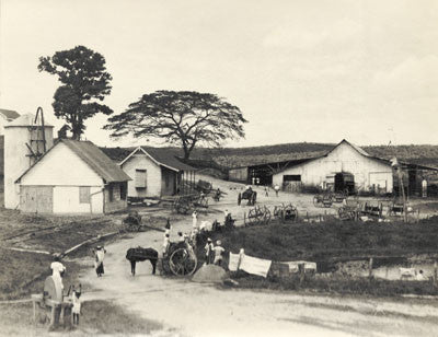 A farm estate at Cedar Hill, St. Madeleine - Trinidad