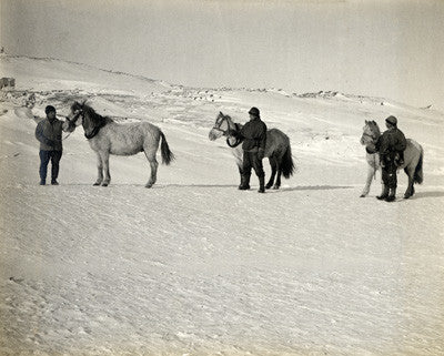 Wilson, Bowers, Cherry-Garrard and ponies on the sea ice