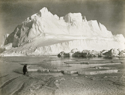 Glacier berg and Emperor penguin