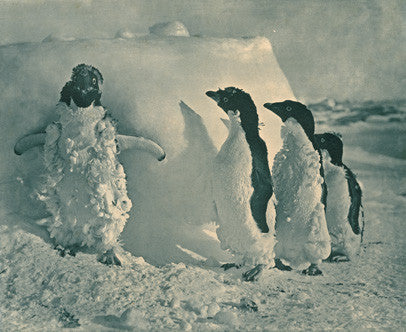 3 penguins staring at a 4th standing against a wall of snow