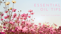 Cut Flower Essential Oil Tips