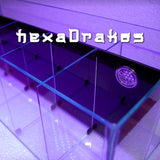 Bettera HexaDrakos XL 10 bettas