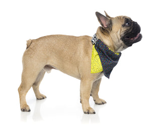 FuzzYard Chomp Reversible Dog  Bandana