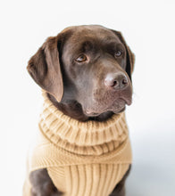 Load image into Gallery viewer, Canine and Co The Jazz Dog Jumper in Camel