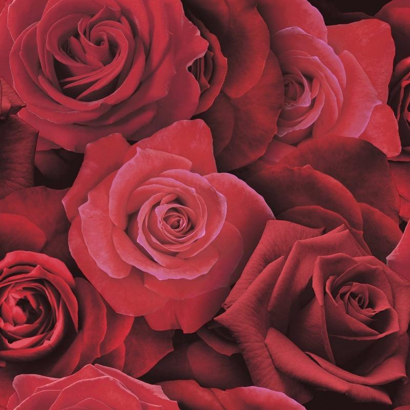 w67511600a Stunning and dramatic rose feature wallpaper.