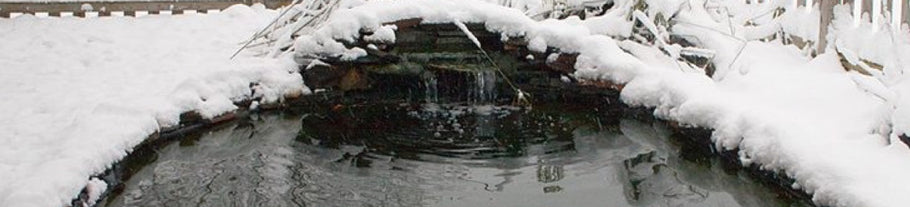Why do we feed pond fish winter food?