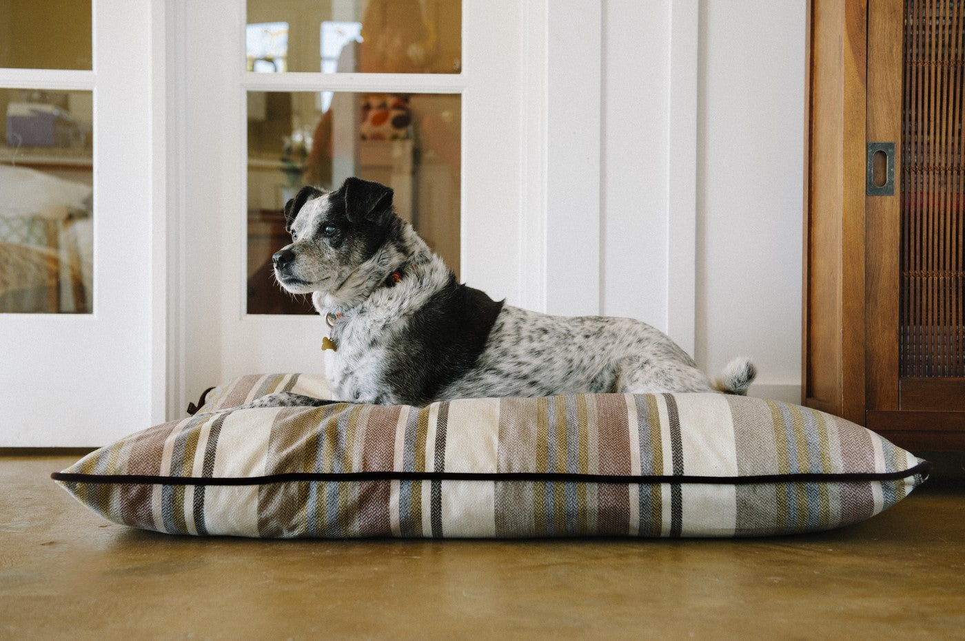 Black and white Fox Terrier,Smooth lies on P.L.A.Y. Seacoast Horizon Pillow bed in front of entrance door