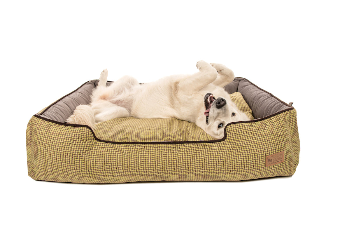 Golden Retreiver is enjoying in P.L.A.Y. Buttercup yellow Houndstooth Lounge bed