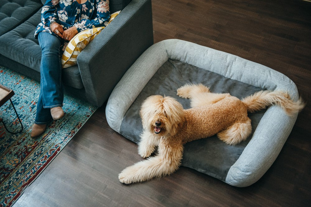 Golden Tibetan Terrier is resting on P.L.A.Y. Memory_foam_bed in the living room