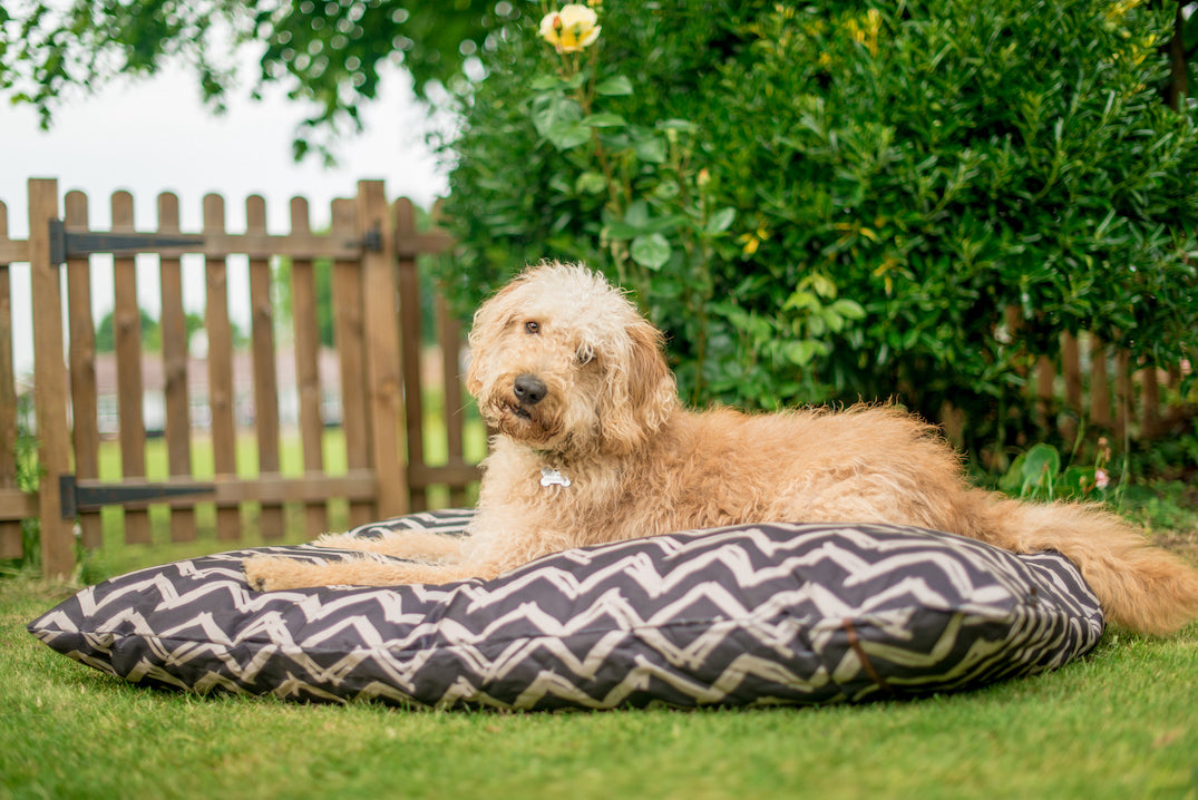 Labradoodle dog lies on P.L.A.Y. Outdoor bed in the garden
