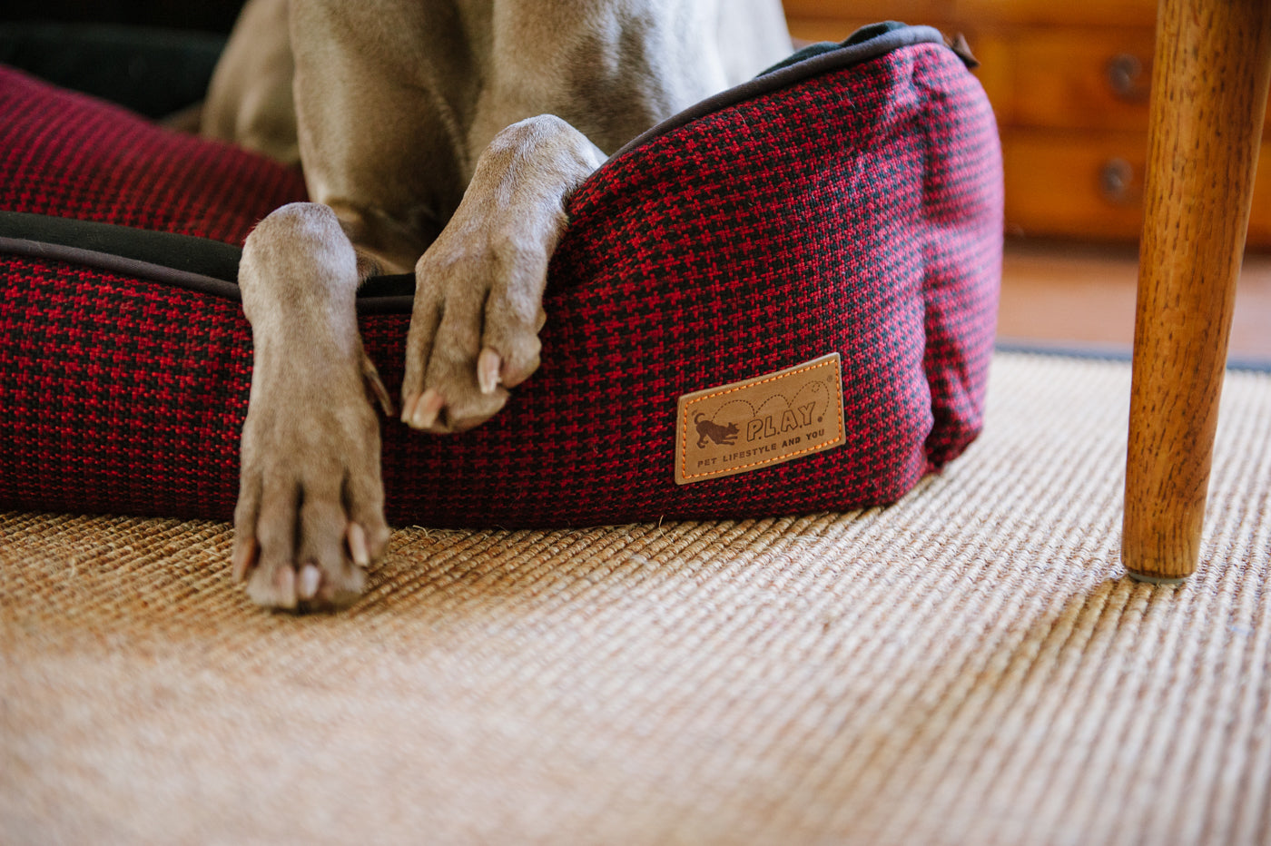 Paws of Weimaraner dog plaiced on the P.L.A.Y. Cayenne Red Hondstooth  Lounge Bed