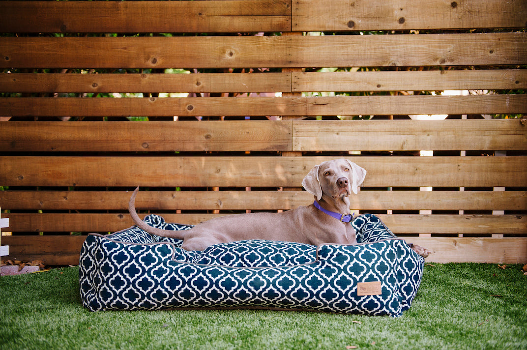 Weimaraner lies in the P.L.A.Y. large navy blue Moroccan Lounge Bed-outdoor