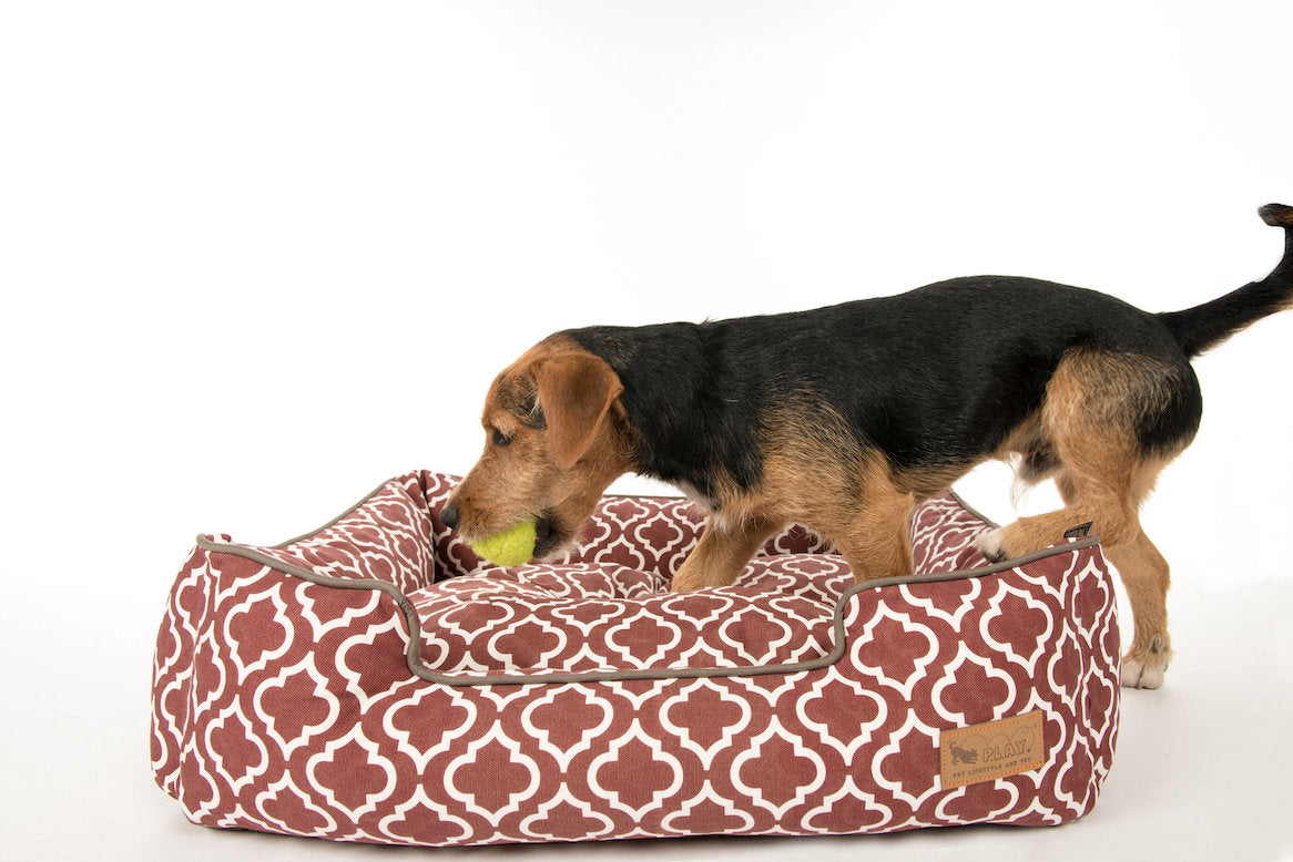 Welsh Terrier is playing in the P.L.A.Y. small Marsala Moroccan Lounge Bed