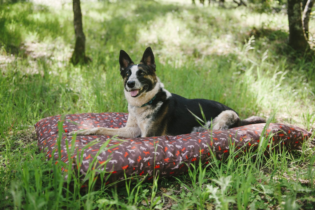 Australian Cattle dog lies on P.L.A.Y. Scout & About Outdoor Mocha bed, in the forest, on green grass during sunny daytime. SKU: PY2011ALF