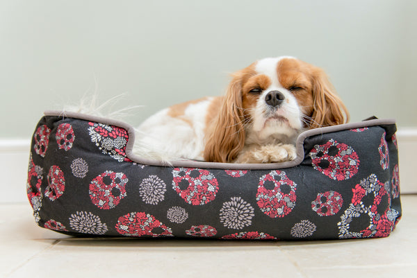 Cavalier King Charle is enjoying in P.L.A.Y. Skulls and Roses Gunmetal Gray lounge bed for puppies and cats. Bed is on marble floor next to wall. SKU: PY3009ASF