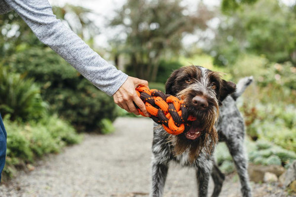 German Wirehaied Pointer dog is chewing P.L.A.Y. Scout & About - Rope Toy - Honeycomb - Large